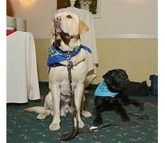 Ptsd service dog training jacksonville fl.aspx Plan