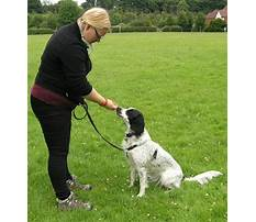Puppy and dog training coventry Plan