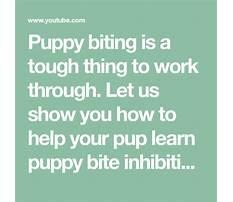 Puppy bite inhibition Plan