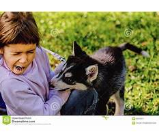 Puppy biting kids Plan