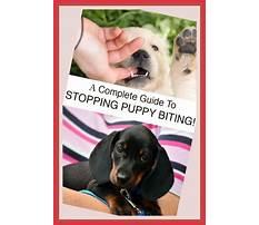 Puppy biting me Plan