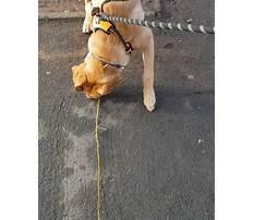 Puppy training biting feet Plan