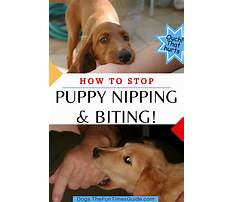 Puppy training to stop biting Plan