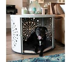 Purpose of crate training your dog Plan