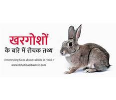 Rabbit information in hindi Plan
