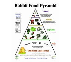 Rabbit nutritional management Plan