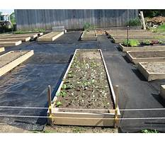 Raised bed design path width Plan