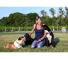 Sarasota dog training.aspx Plan
