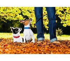 Service dog training nashville tn.aspx Plan