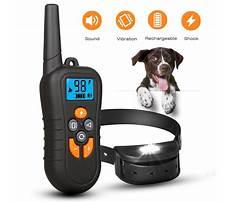 Shock collars for training dogs Plan