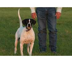 Special dog training.aspx Plan