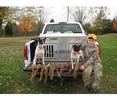 Squirrel hunting dog training tips.aspx Plan
