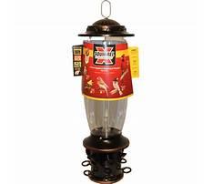 Squirrel x bird feeder reviews Plan