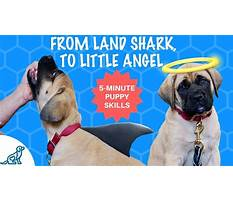 Stop a puppy from biting Plan