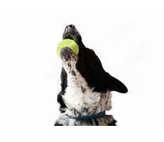 Stop dog barking for attention Plan