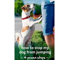 Stop dog from jumping Plan