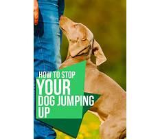 Stop dog jumping Plan