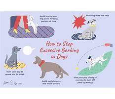 Stop excessive dog barking Plan