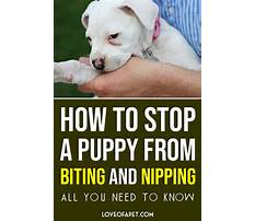 Stop puppies from nipping Plan