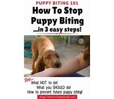 Stop puppies nipping Plan