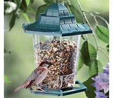Suet bird feeder woodworking plan.aspx Plan