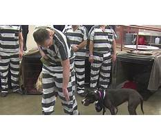 Therapy dog training dfw Plan