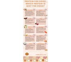 Too much protein in dog diet Plan
