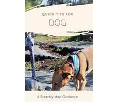 Top dog training videos.aspx Plan