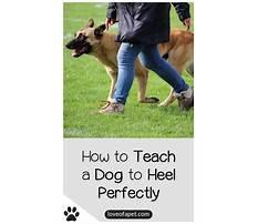 Train a dog to heel video.aspx Plan