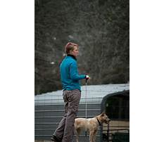 Train cattle dog Plan