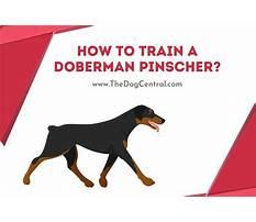 Train doberman dog Plan