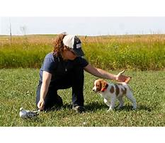 Train dog bird hunt Plan