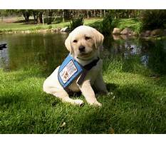 Train dog detect seizures Plan