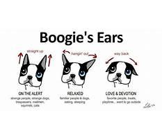 Train dog ears Plan
