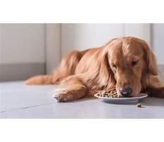 Train dog eat slower Plan