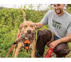 Train dog hunt deer Plan