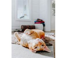 Train dog to leave cat alone Plan