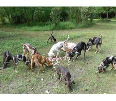 Train dog track wounded deer Plan