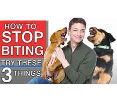 Training a dog not to bite Plan