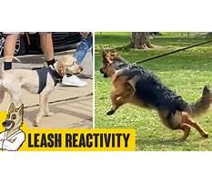 Training dog leash aggression.aspx Plan