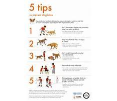 Training dogs that bite Plan