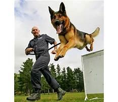 Training police dogs nz Plan