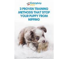 Training puppy not to nip Plan