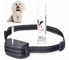 Training small dogs not to bark Plan