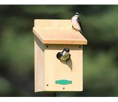 Tree swallow bird houses for sale Plan