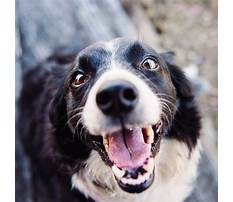 Ways to stop barking dogs Plan
