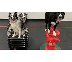 Westchester dog training.aspx Plan