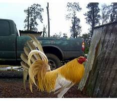 Where to buy chicken coops in kentucky Plan
