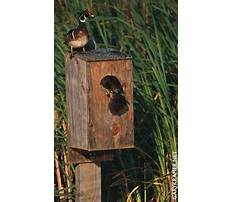 Wooden planter boxes diy asp tutorial Plan