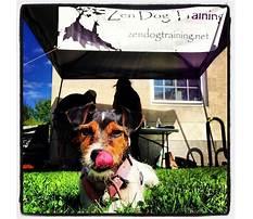 Zen dog training arlington.aspx Plan